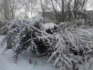 Die letzten Tage des Dezembers 2011, die letzten Tage im Jahr2011…